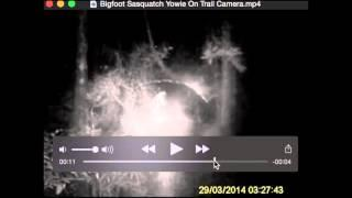 Bigfoot Sasquatch Yowie On Trail Camera Breakdown
