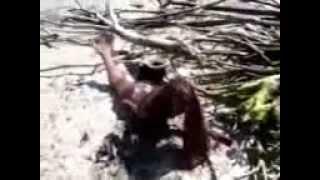 Mermaid Body Washed Ashore? (2013 Video)