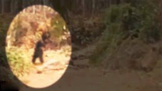 OMG!! Something Very Strange Walking Caught On Camera In Forest!!