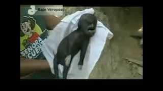 Νότια Αμερική 2011.Μαύρο αλλόκοτο πλάσμα ανακαλύφθηκε σε παραλία.