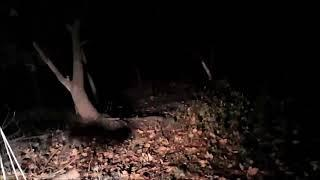 best footage of the haunted woods