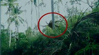 Real Slender man Sighting From Indonesia Forest |  Slender Man Real Footage | Scary Videos