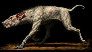 Skeleton of legendary devil dog Black Shuck who terrorised 16th century East Anglia Folklore tells o