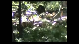 Clear video of bigfoot in sierra national park Breakdown