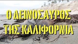 ΑΛΛΟΚΟΤΟ.Ζώο που μοιάζει με δεινόσαυρο ξεβράστηκε στην Καλιφόρνια.
