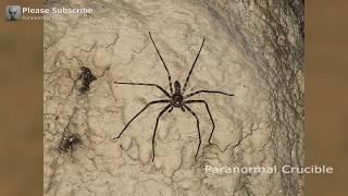 Possible Large Arachnid Found On Mars?