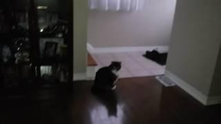 cat light anomalie