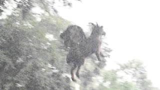 New Jersey Devil Photo Breakdown