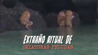 Ritual de extrañas Criaturas Peludas EXPLICACION