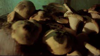 Radley 2014 - Teaser 4