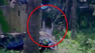 Mysterious Monsters Caught on Camera In Forest!! Real Ghost Video!!