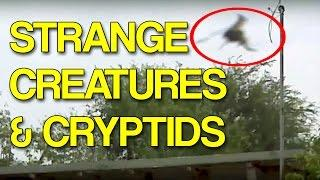 More Strange Creatures and Cryptids Caught on Tape