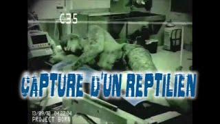 réptilien capturé (projet BORN)