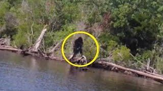 Step right up and see the real Bigfoot