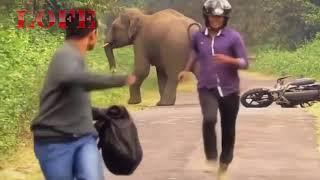 Revenge Compilation | Freedom for Wild Animals | Tiger, Elephant, Lion, Goat ...