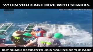 shark attack on man in the cage scary |nice video