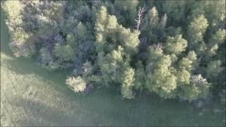 Drone Footage of Idaho Bigfoot - IMPORTANT UPDATE!