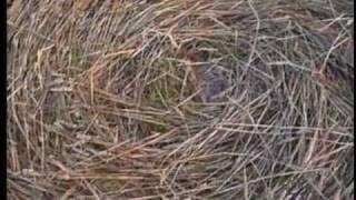 Crop Circles - Part 3