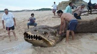 Sea monsters and strange creatures found all around the world