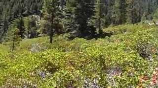 """Jobs Peak - Part 31 """"Off The Path In Luther Canyon"""""""