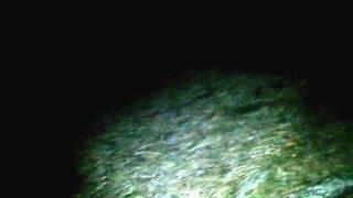 Vlog Εμφανίσεις στο δάσος (βραδινή ερευνά)