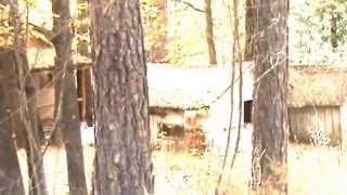 Keddie Murders | Cabin 28 | Found Footage from 2009 at Keddie, CA