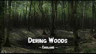 BRITAINS MOST HAUNTED WOODS