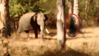 Real Ghost Caught On Tape In Forest Near Animals!!