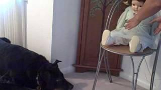 DOG AND CAT WITH HAUNTED DOLL 2