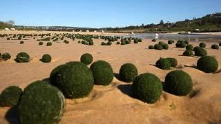 Green Alien Eggs Wash Up On Beach?