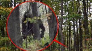6 Most Believable BIGFOOT Sightings / Footage