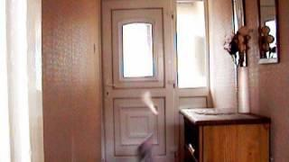Poltergeist Activity Caught on Video Tape in Broad Daylight
