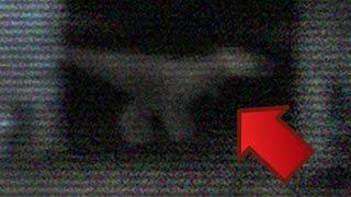 Real Baby Tyrannosaurs-Rex Sighting Caught On Camera (video)レアルベビーティラノサウルス・レックスの目撃は、カメラでキャッチ