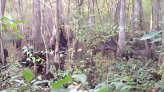 Brave (or crazy) hiker sneaks up on bigfoot ! Raw footage