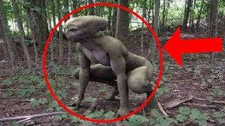 10 Tenebrosas Criaturas Extrañas Captado en Video