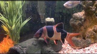 Fish Tank update!!! A tour around my little aquarium. Sept. 23, 2016 Allen's Corner