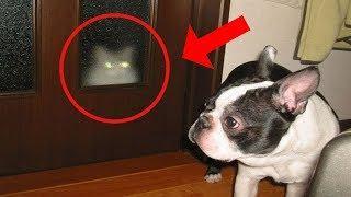 7 Terroríficos Videos de Gatos Viendo Fantasmas