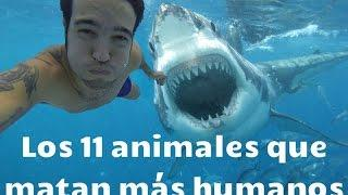 Los 11 ANIMALES que MATAN más HUMANOS
