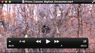 Provo Canyon Bigfoot Encounter Breakdown