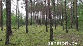 Санаторий Рассвет-Любань - территория, Санатории Беларуси