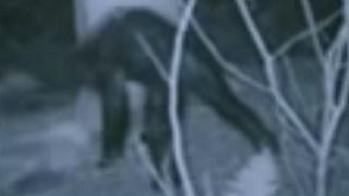 Trail camera captures young bigfoot / sasquatch!  Analysis provided