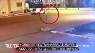 #GritoPop | EXTRAÑA CRIATURA EN TURQUIA