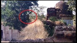Ghost hanging on tree in abandoned place: Ghost caught tape Scary Videos