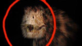 Actividad paranormal real, dinosaurios vivos, Slenderman, Goblins, sirenas cogidos en la cámara 2016
