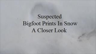 Suspected Bigfoot Prints In Snow: A Closer Look