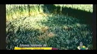 OVNIS Agrogramas / crop circle 2004 - ParanormalMx.com