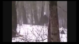 Bigfoot Sighting Ohio Huge Creature 2012 Breakdown