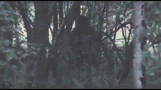 Truckee California Bigfoot Sighting Send In Breakdown