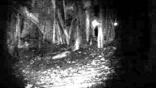 Sembawang Park investigation video 1