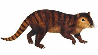 Newly discovered mammal species survived dinosaur extinction